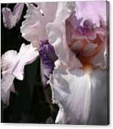 Iris Lace Canvas Print