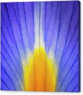 Iris Leaf Abstract Canvas Print