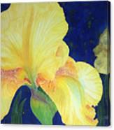 Iris Miami Beach Canvas Print