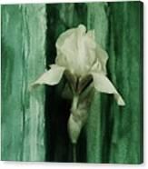 Iris On Green Canvas Print