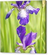 Iris Pair Canvas Print
