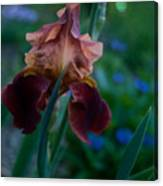Iris Passion Canvas Print