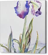 Iris Passion Canvas Print