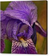 Iris Popping Out Canvas Print