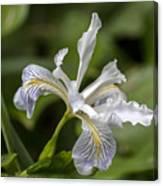 Iris Profile Canvas Print