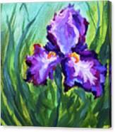 Iris Solo Canvas Print