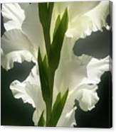 Gladiolus Spectacular #2 Canvas Print