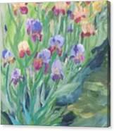 Iris Spring Canvas Print