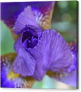 Iris Square Canvas Print