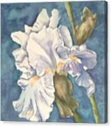 Iris twenty one Canvas Print