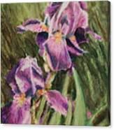Iris Twins Canvas Print