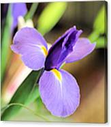 Iris Unfolding IIi Canvas Print