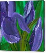 Iris Up Close And Personal Canvas Print