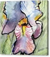 Iris With Impact Canvas Print