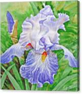 Iris.drops Of Dew .2007 Canvas Print