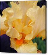 Irises Art Prints Peach Iris Flowers Artwork Floral Botanical Art Baslee Troutman Canvas Print