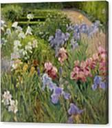 Irises At Bedfield Canvas Print