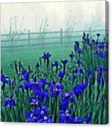 Irises At Dawn 3 Canvas Print