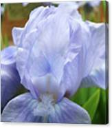 Irises Blue Iris Flower Light Blue Art Flower Soft Baby Blue Baslee Troutman Canvas Print