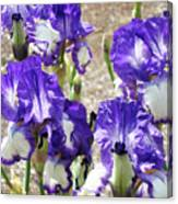 Irises Floral Art Iris Flowers Purple White Baslee Troutman Canvas Print
