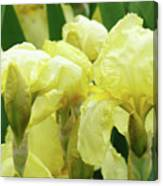 Irises Flower Garden Yellow Iris Baslee Troutman Canvas Print