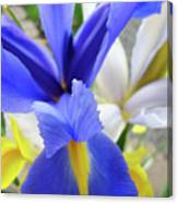Irises Flowers Artwork Blue Purple Iris Flowers 1 Botanical Floral Garden Baslee Troutman Canvas Print