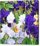 Irises Flowers Garden Botanical Art Prints Baslee Troutman Canvas Print