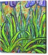 Irises In A Sunny Garden Canvas Print