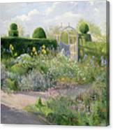 Irises In The Herb Garden Canvas Print