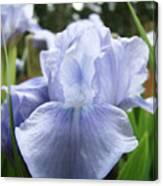 Irises Light Blue Artwork Iris Flowers Baslee Troutman Canvas Print
