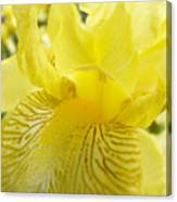 Irises Yellow Brown Iris Flowers Irises Art Prints Baslee Troutman Canvas Print
