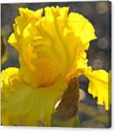 Irises Yellow Iris Flowers Art Prints Floral Canvas Baslee Troutman Canvas Print