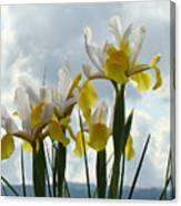 Irises Yellow White Iris Flowers Storm Clouds Sky Art Prints Baslee Troutman Canvas Print