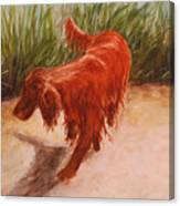 Irish Setter In The Grass Canvas Print