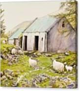 Irish Sheep Farm Canvas Print