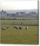 Irish Sheep Farm I Canvas Print