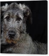 Irish Wolfhound Droc Vi Canvas Print