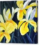 Irisis Canvas Print