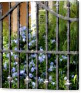 Iron Gate And Blue Flowers Canvas Print