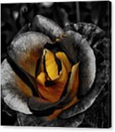 Iron Rose Canvas Print