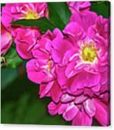 Irresistible Rose - Paint Canvas Print