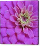 Irridescent Pink Canvas Print