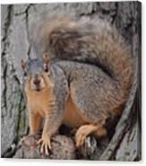 Irritated Squirrel Canvas Print