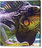 Island Iguana Canvas Print