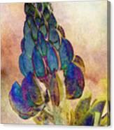 Island Lupin 2 Canvas Print