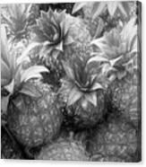 Island Pineapples Canvas Print