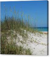 Island Sea Oats Canvas Print