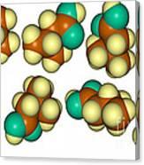 Isovaleric Acid Molecular Models Canvas Print