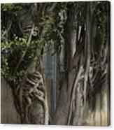 Israel, Tree Trunk Canvas Print