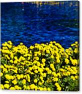 It Was All Yellow... Canvas Print